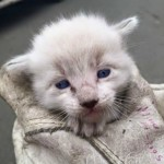 animal shelter grants Petfinder Foundation support Petfinder members Jeff kitten