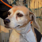 Petfinder Foundation Grant Opportunities dog sweetheart