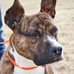 Petfinder Foundation Grant Opportunities dog Cody