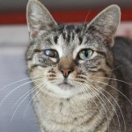 Petfinder Foundation Grant Opportunities cat myrtle