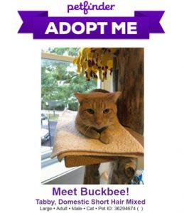 Pet List Printer flyer adopt me Petfinder
