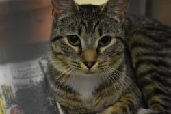 Petfinder Foundation Grant Report Cat Enrichment Penny was helped