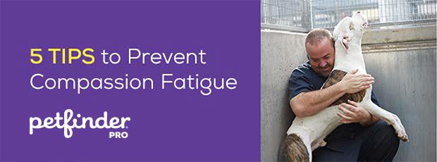 5 Tips to prevent compassion fatigue header image man hugging dog