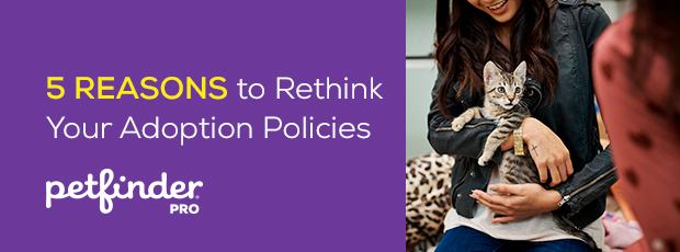5 Reasons to Rethink Your Adoption Policies Article Header Image Cat in Adopter Arms