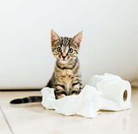 Back to school blues cat toilet paper roll