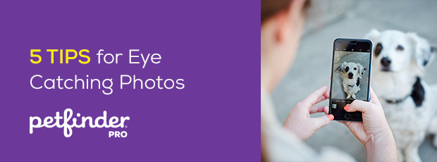 5 Tips for Eye Catching Photos Header Image Dog getting his photo take
