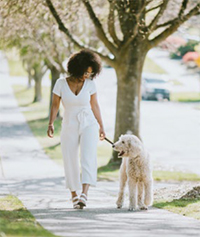 Summer heat risk woman and dog walking