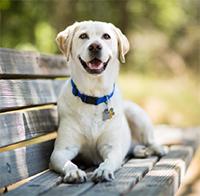 Summer heat risk dog on bench