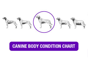 Canine Body Condition Chart