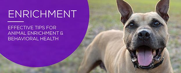 Enrichment for adoptable pets