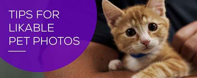 5 Tip for creating great pet photos